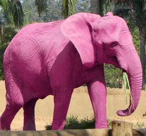 Temporada de elefantes rosados