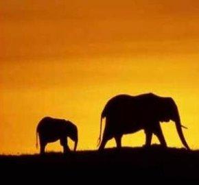 �No piensen en un elefante�